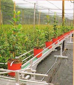 Nastro trasportatore per piante in vaso